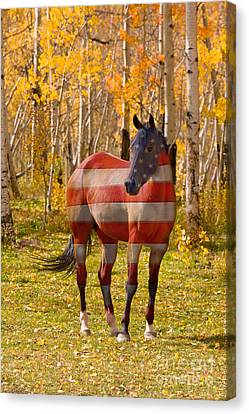 American Bred Canvas Print by James BO  Insogna