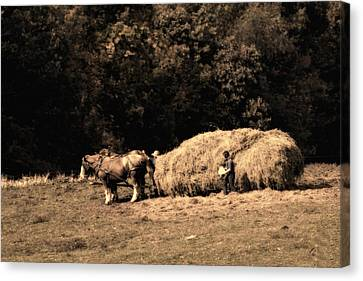 Amish Hay Wagon Canvas Print by Tom Mc Nemar
