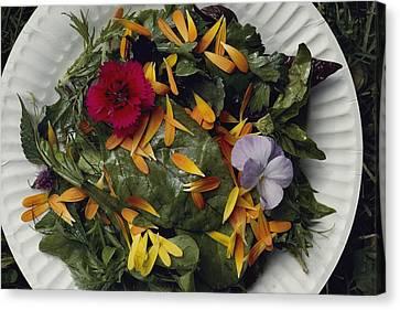 An Edible Salad At The Tilth Harvest Canvas Print by Sam Abell