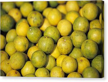 An Enticing Display Of Lemons Canvas Print by Jason Edwards