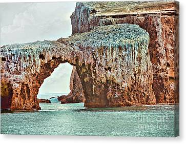 Anacapa Island 's Arch Rock Canvas Print by Cheryl Young