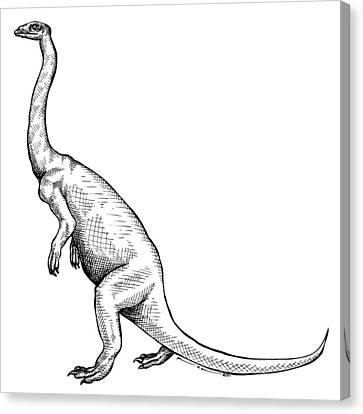 Anchisaurus - Dinosaur Canvas Print by Karl Addison
