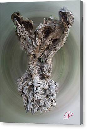 Ancient Old Olive Tree Canvas Print by Colette V Hera  Guggenheim