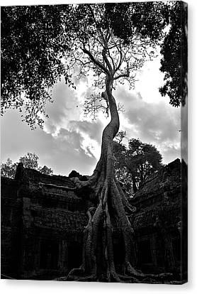 Ancient Tree Canvas Print by Arj Munoz