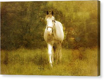 Andre On The Farm Canvas Print by Trish Tritz