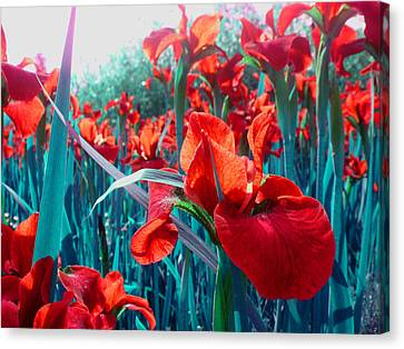 Flowers Canvas Print featuring the photograph Ant View by Roberto Alamino