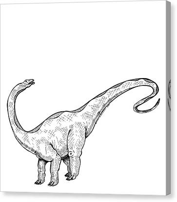 Apatosaurus - Dinosaur Canvas Print by Karl Addison