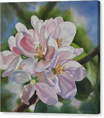 Apple Blossoms Canvas Print by Sharon Freeman