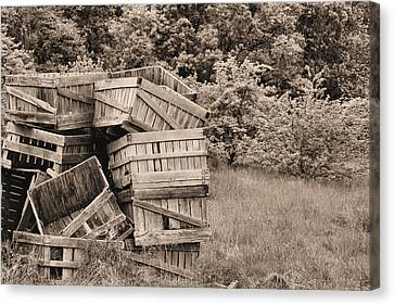 Apple Crates Sepia Canvas Print by JC Findley