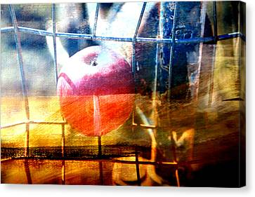 Apple In A Basket Canvas Print by Toni Hopper