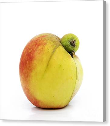 Apple With An Excrescence Canvas Print by Bernard Jaubert