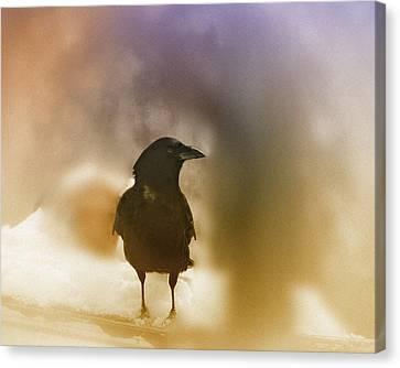 April Raven Canvas Print by Susan Capuano