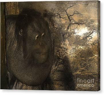 Arboreal Dreams Canvas Print by Arne Hansen