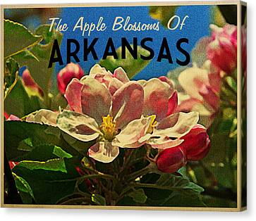 Arkansas Apple Blossoms Canvas Print by Flo Karp