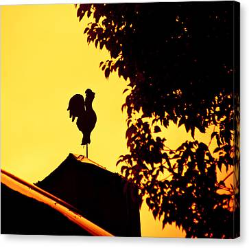 As A Rooster Crows Canvas Print by Carolyn Marshall