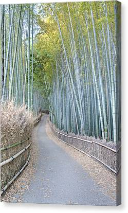 Asia Japan Kyoto Arashiyama Sagano Canvas Print by Rob Tilley