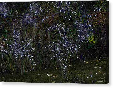 Aster Days Canvas Print by Ron Jones