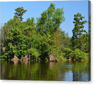 Atchafalaya Basin 46 Canvas Print by Maggy Marsh