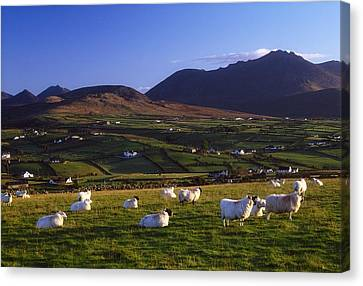 Aughrim Hill, Mourne Mountains, County Canvas Print by Gareth McCormack