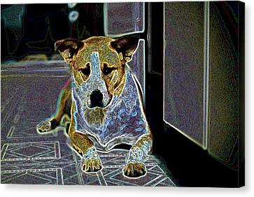 Australian Cattle Dog Boxer Mix Canvas Print by One Rude Dawg Orcutt