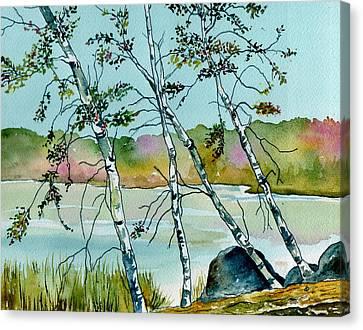 Autumn Birches Canvas Print by Brenda Owen