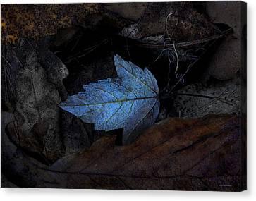 Autumn Blue Canvas Print by Ron Jones