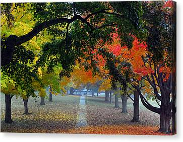 Autumn Canopy Canvas Print by Lisa Phillips