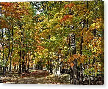 Autumn Colors Canvas Print by Rodney Campbell