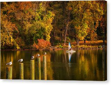 Autumn Day Canvas Print by Boyd Alexander