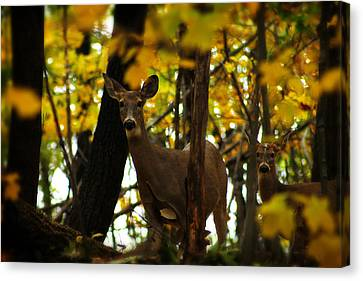 Autumn Doe Canvas Print by Scott Hovind