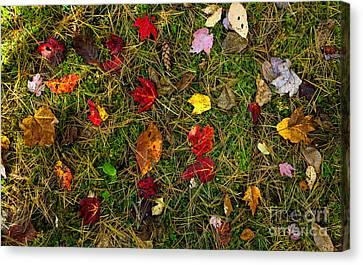 Autumn Forest Floor Canvas Print by Matt Tilghman