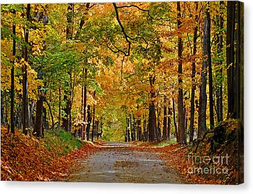 Autumn Gold Canvas Print by Rodney Campbell