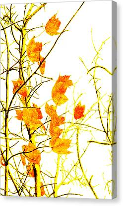 Autumn Leaves Abstract Canvas Print by Andee Design