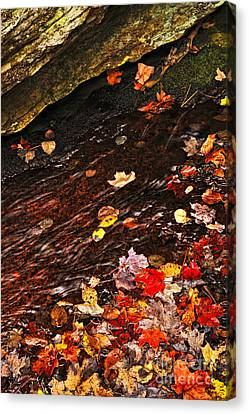 Autumn Leaves In River Canvas Print by Elena Elisseeva