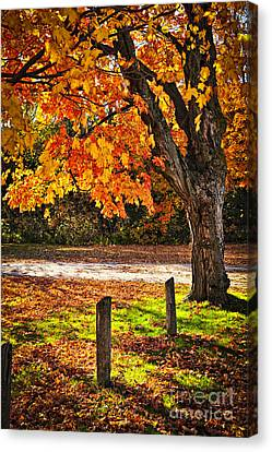 Autumn Maple Tree Near Road Canvas Print by Elena Elisseeva