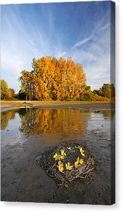 Autumn Nest Canvas Print by Mircea Costina Photography