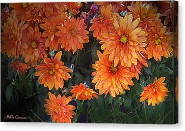 Autumn Orange Flowers Canvas Print by Mikki Cucuzzo