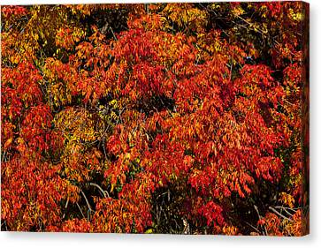 Autumn Red Canvas Print by Garry Gay