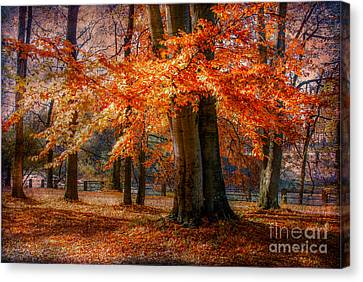 autumn skirt III Canvas Print by Hannes Cmarits