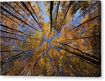 Autumn Sky Canvas Print by Mircea Costina Photography