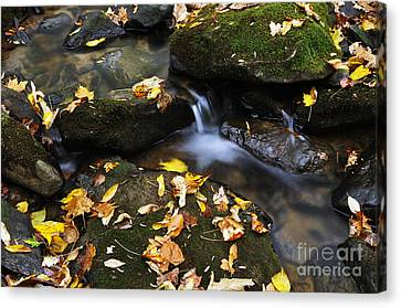 Autumn Stream Monongahela National Forest Canvas Print by Thomas R Fletcher