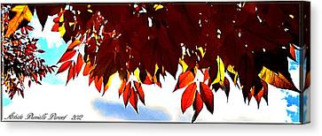 Autumn Sun Glory Canvas Print by Danielle  Parent