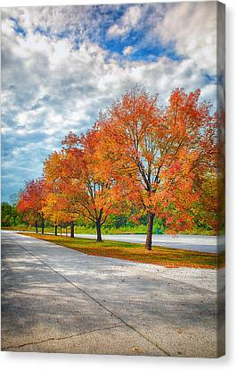 Autumn Trees At Busch Canvas Print by Bill Tiepelman