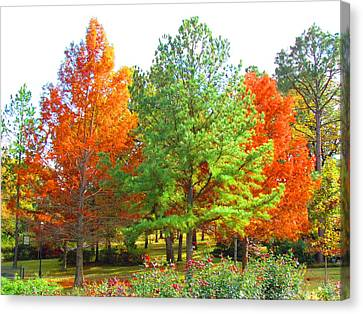 Autumn Trees Canvas Print by Evgeniya Sohn Bearden