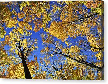 Autumn Treetops Canvas Print by Elena Elisseeva