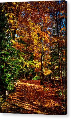 Autumn Walk Canvas Print by David Patterson