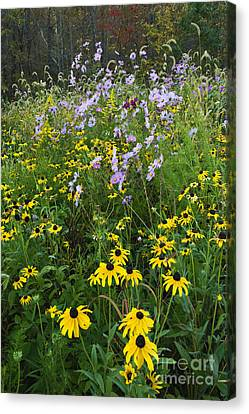 Autumn Wildflowers - D007762 Canvas Print by Daniel Dempster