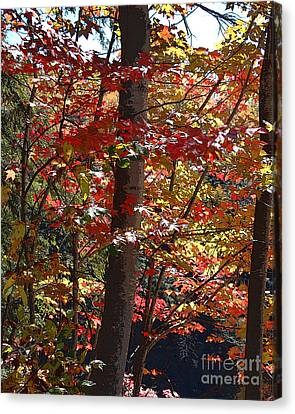 Autumn's Delight Canvas Print by Diane E Berry