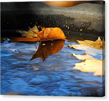 Autumn's Reflection Canvas Print by Jai Johnson
