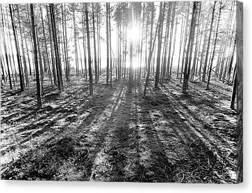 Backlight Canvas Print by Micael  Carlsson
